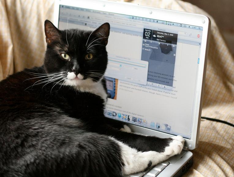 Flickr/Wabisabi2015/Jester the Cat